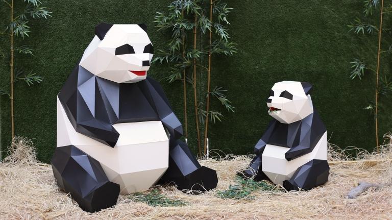 panda1-s